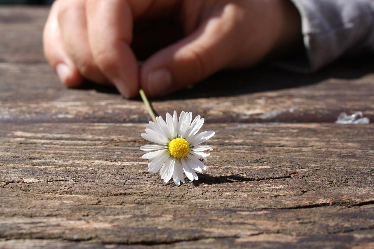 ¿Cómo el coaching ejecutivo me ayuda a crecer?