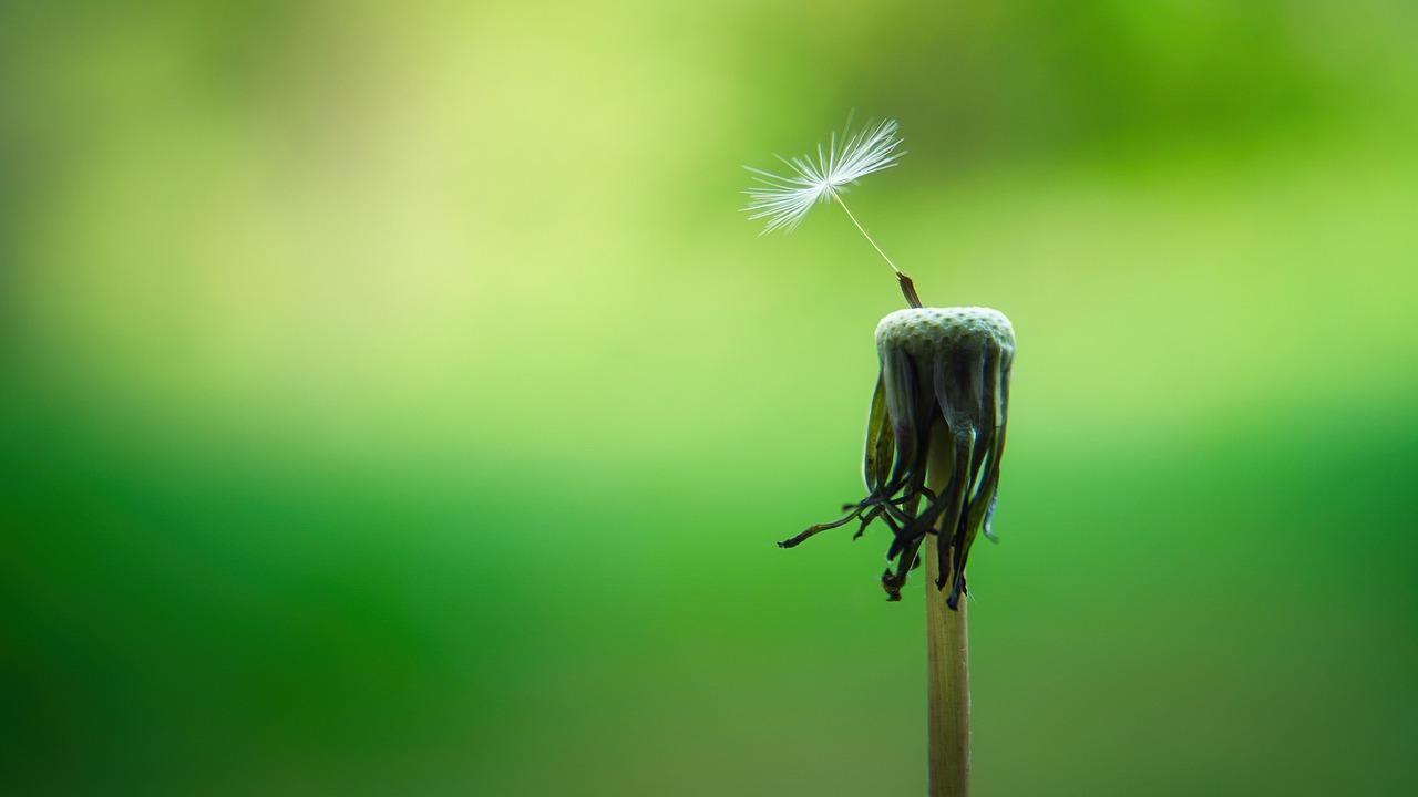¿Cómo te ayuda el mindfulness a ser tu mejor versión?